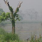 Royal Chitwan National Park by kateabell