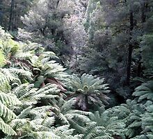 Tara Bulga National Park by Tamara Bush