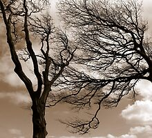 Wuthering Heights by Anima Fotografie