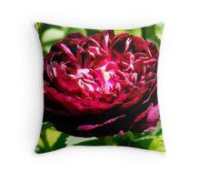 Radiant Rose Throw Pillow