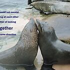 Seal Love: In the Same Direction by CreativeEm