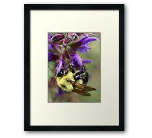 Upside Down Bee Framed Print