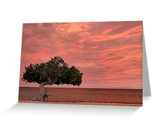Divi Divi Sunset Greeting Card