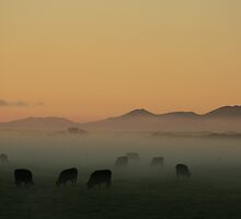 Sunrise near Stanley in far nor west Tasmania , Australia by phillip wise