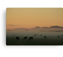 Sunrise near Stanley in far nor west Tasmania , Australia Canvas Print