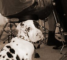 Great Dane Puppy Drummer by sachapacker