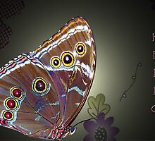 HELLO Butterfly by Bonnie T.  Barry