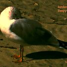 Jordan's Sleepy Bird by Roger Sampson