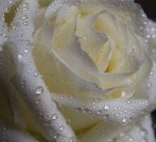 Gouttelettes d'eau by Lorraine Creagh