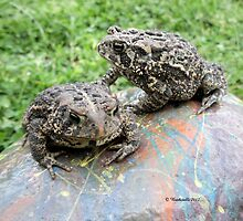 Two Big Toads on a Painted Rock in the Garden - Wildlife Photography by Barberelli