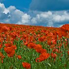Papaver rhoeas by nedals71