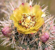 Ladybug & Cactus Flower by Benjamin Padgett
