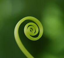 Green Cumber Tendrical by John Newson