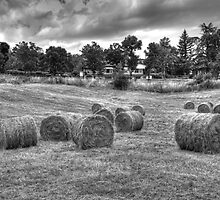 Hay bales in Tuscany by Gino Iori
