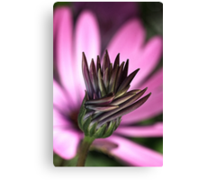 Whispering Daisy Canvas Print