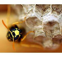 Wasp 2 Photographic Print