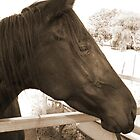 Pretty black mare by Liz Percival