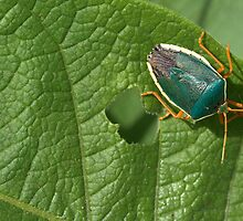 hungry green bug by Ryan Bird