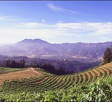 vineyards of Northern california, usa by chord0