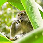 Monkey business by Juha Sompinmäki