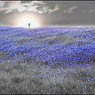 My Beautiful Ending by Rob Raab