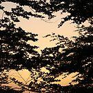 Foliage by Joakim