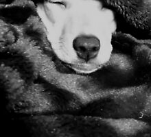 Adorable Sleeping Greyhound, Chihuahua Mix Puppy by Princess1222