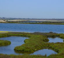Bolsa Chica Wetlands 4 by Bradley Murrell