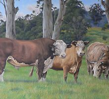 Warrawillah Cattle: Westy, Bellyache & Mexican by louisegreen