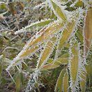 winter bamboo by yvesrossetti