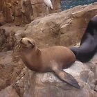 Sealions on the Rocks by DJMarchese