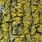 Liken This Lichen More by Kate Hibbert