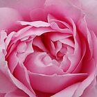 Pink Delight...... by karen Bradshaw