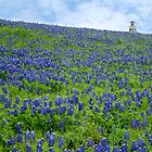 Bluebonnet Heaven by Rob Raab