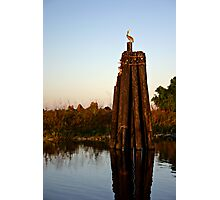 Pelican, A Dolphin, and Sunset on Lake Okeechobee Photographic Print