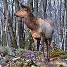 She - Elk by Poete100