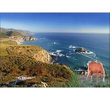 907-Oceanside Wild Photographic Print