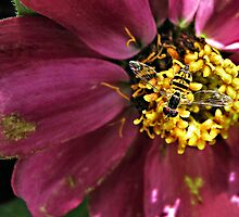 Tiny Sweat Bee by JulsDesigns
