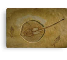 Flat Fish Fossil Canvas Print