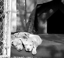 trio of puppies by Miriam Gordon