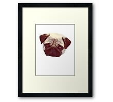 Little Pug Framed Print