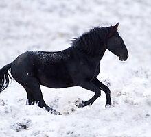 Snow Dance by Kent Keller