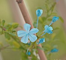 floweret by Babble Designs