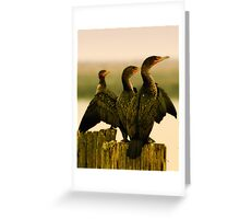 Cormorants on the River Greeting Card