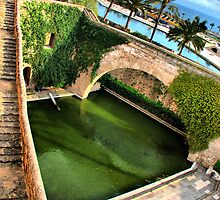 Palma - The Pond by A90Six