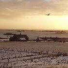 Winter sunset by Fiona MacNab