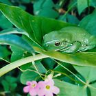 Green Tree Frog by TerraChild