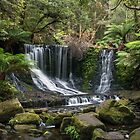 Horseshoe Falls Palms - Tasmania by Paul Campbell  Photography