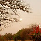 Firey cactus at full moon by Sparowsong
