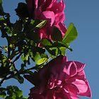Soaking up the Sun by Darlene Ruhs
